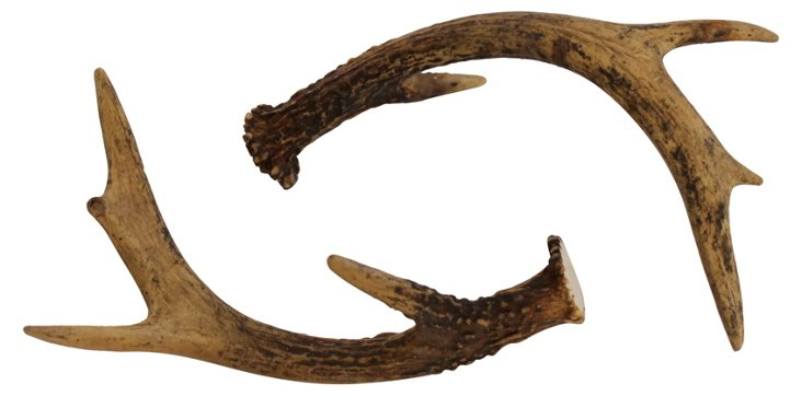 White-Tailed    Deer Antlers, Pair