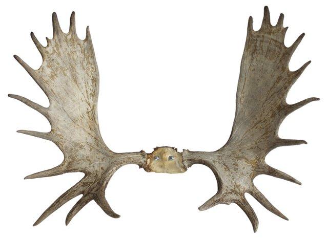 Moose Rack
