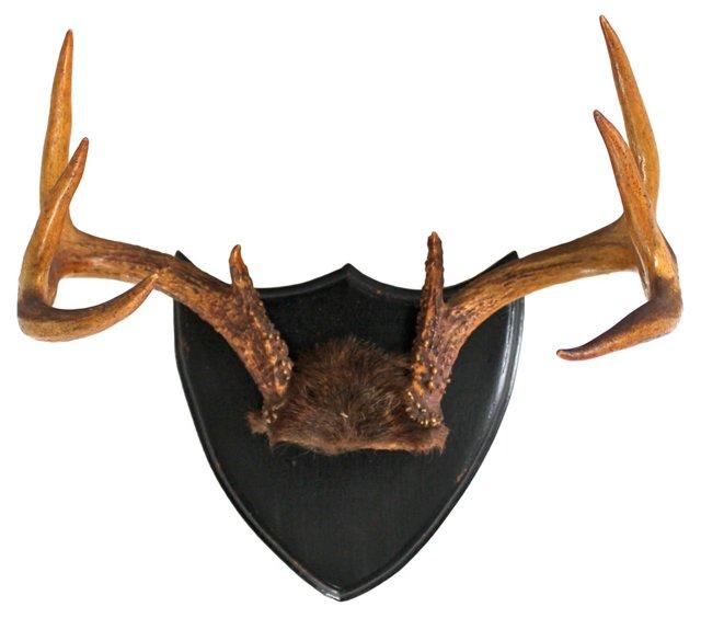 8 Point Deer Rack