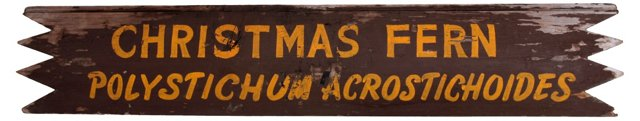 Christmas Fern Sign