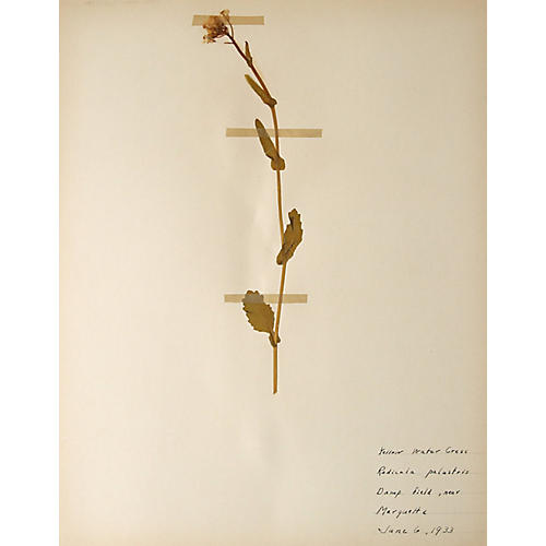 Yellow Watercress, 1933