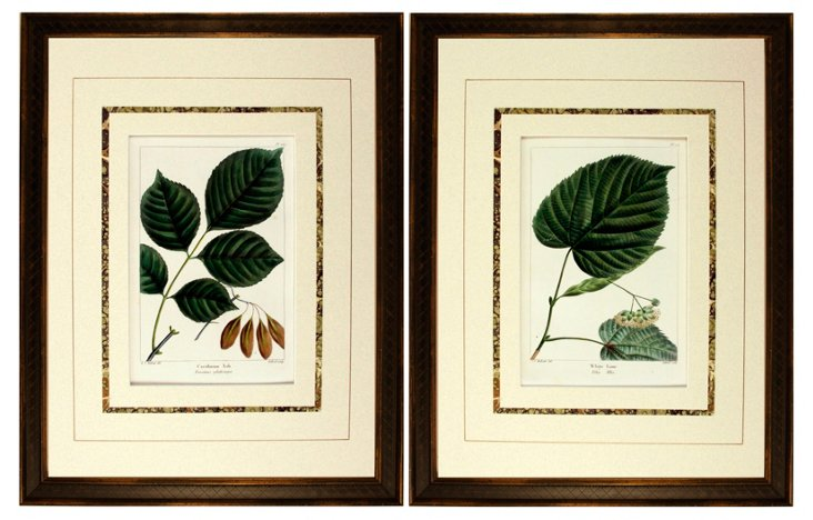 Antique   Botanical Engravings,  Pair