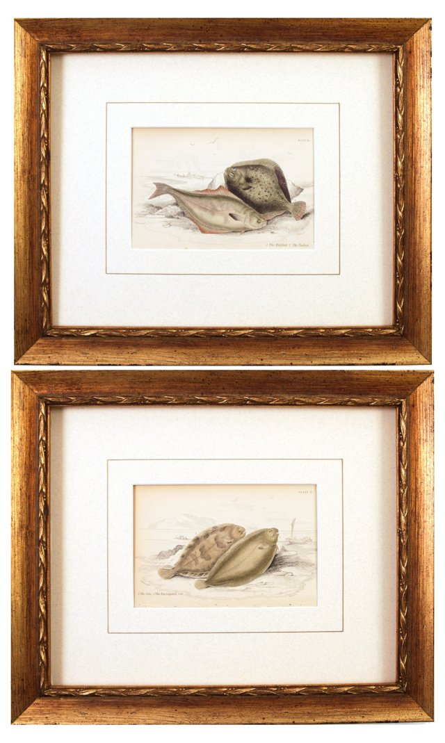 Antique Flounder Engravings, Pair