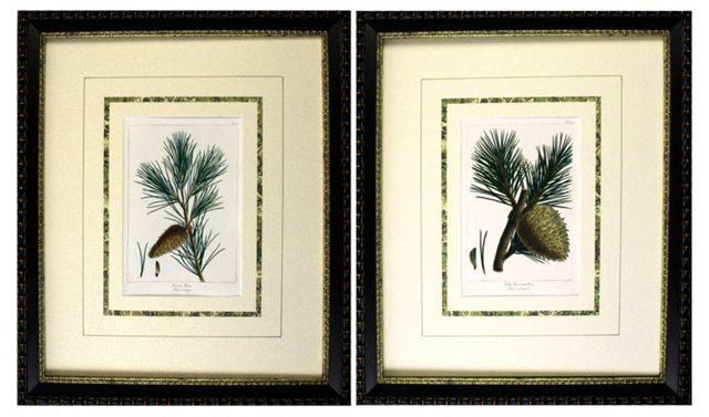 Antique Pine Engravings, 1865,  Pair
