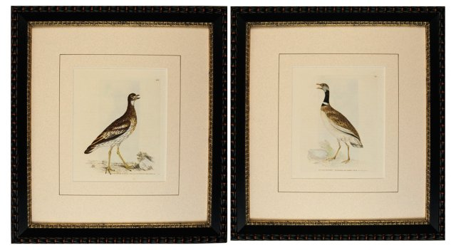 Lewin    Bird    Engravings, 1793, Pair