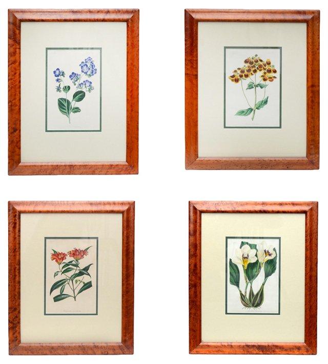 English Giclée Prints, Set of 4