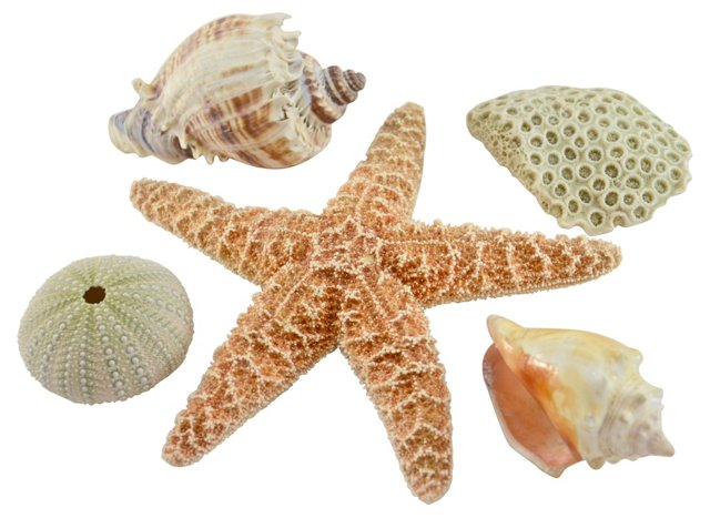 Starfish & Shell Collection, S/5