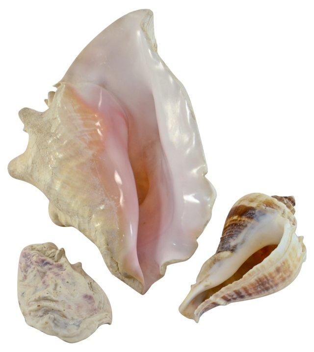 Conch Shells, S/3