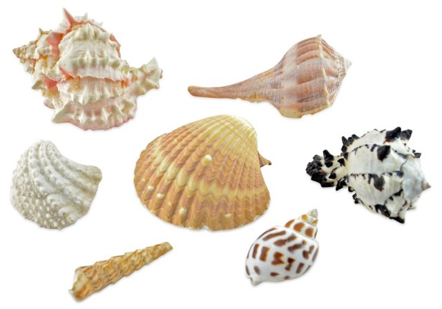 Shell Collection, S/7