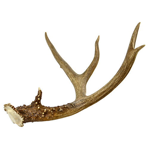 Four-Point Deer Antler