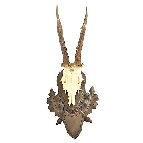 """Mounted 15"""" Euro Roe Deer Antlers"""