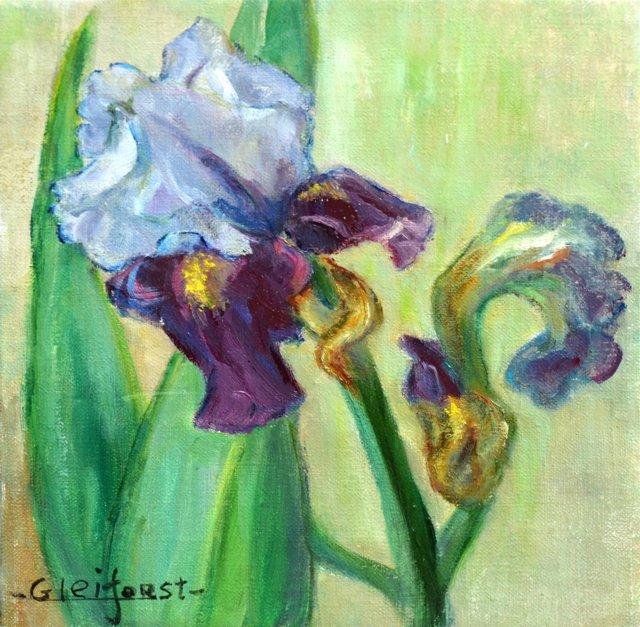 Bearded Iris by Helen Gleiforst