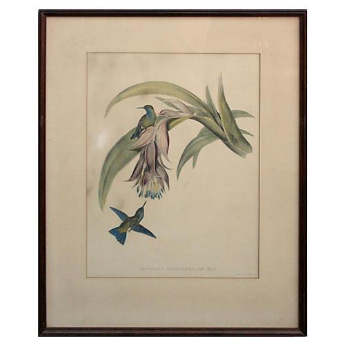Hummingbirds by Gould & Richter