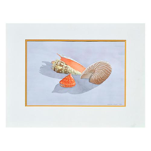 Seashells by Barbara Gibson