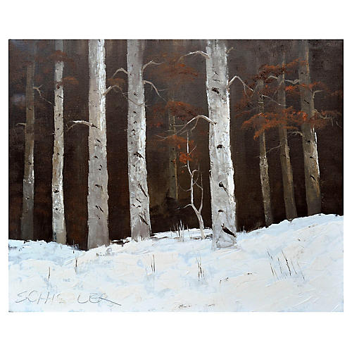 Colorado Birches in the Snow
