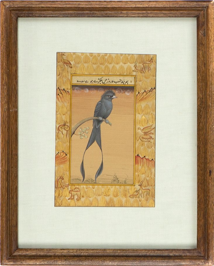 Manuscript, Bird