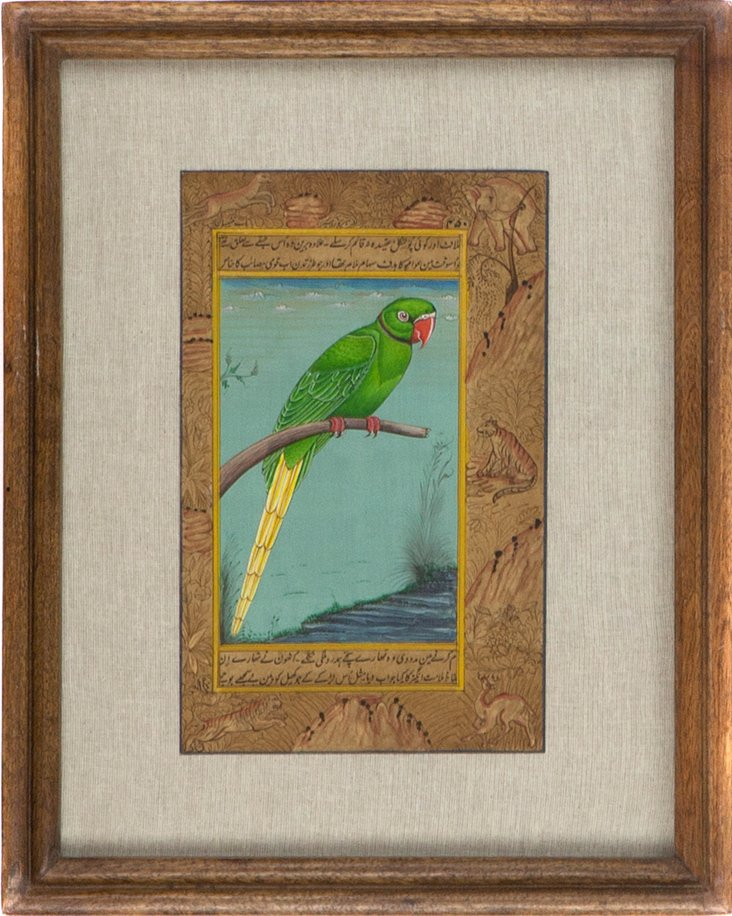 Green Parrot on Manuscript