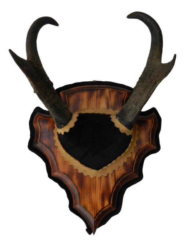 Mounted Antelope Horns