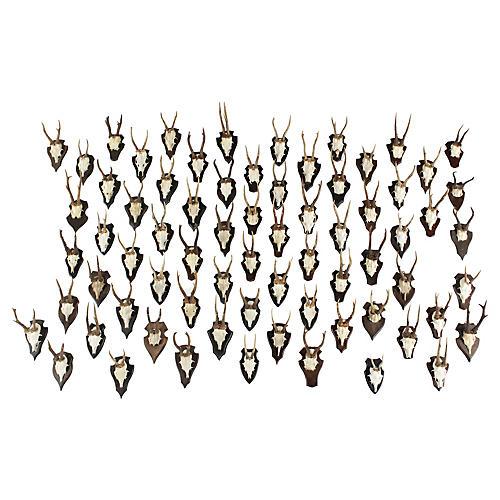 Vintage German Roe Deer Antlers, S/75