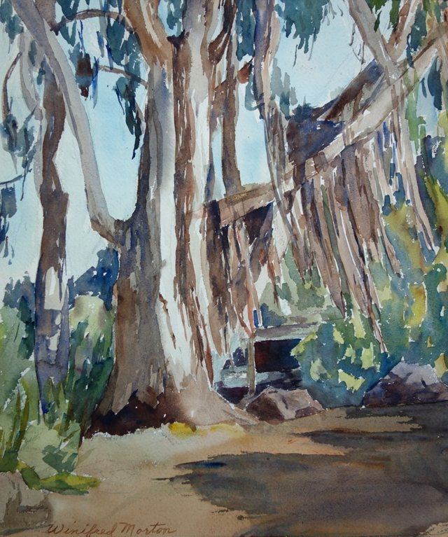 Eucalyptus Tree by Winifred Morton