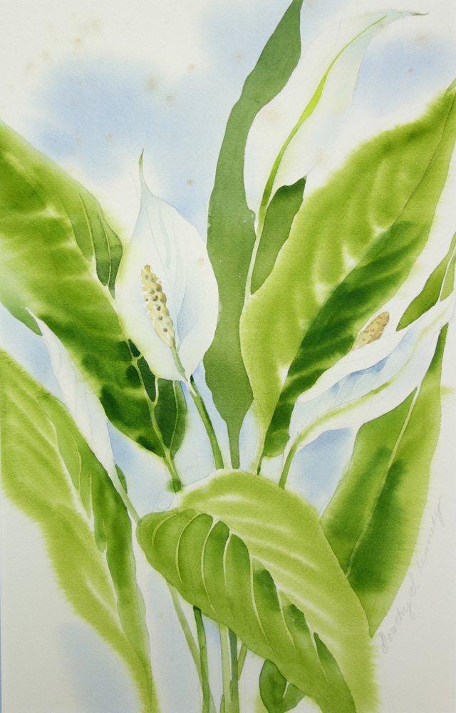 Calla Lilies by Dorothy Kennedy