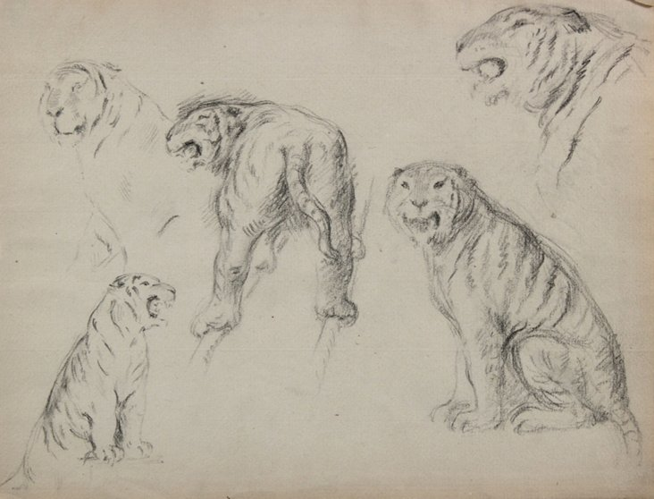 Early-20th-C.    Tiger Study