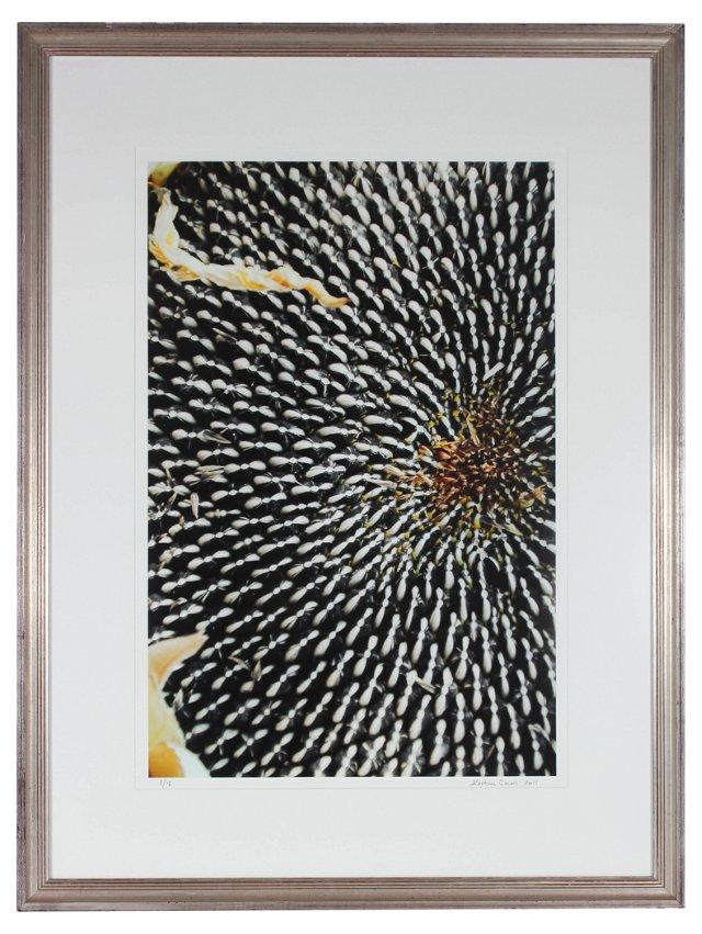 California Sunflower Seeds, Gaetan Caron