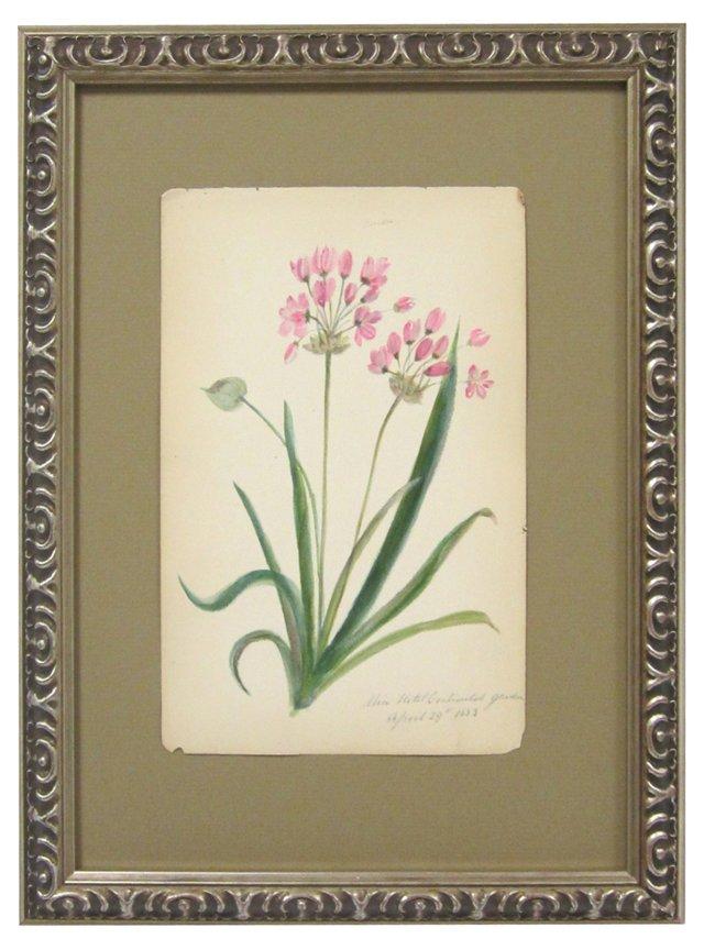 Wild Onion Blooms, 1883