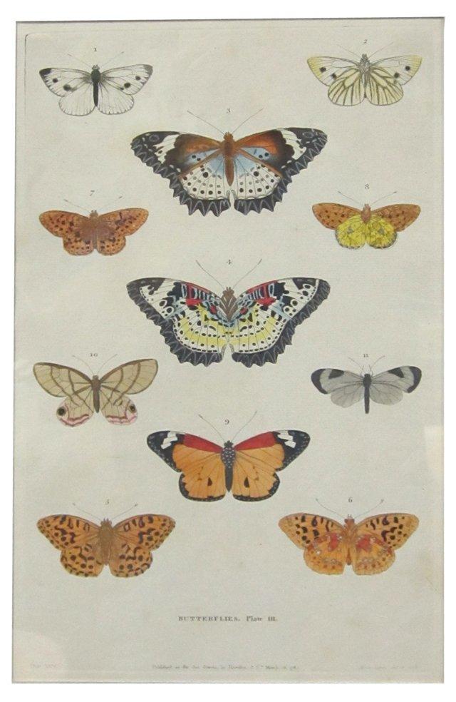 Engraving of Butterflies, 1785