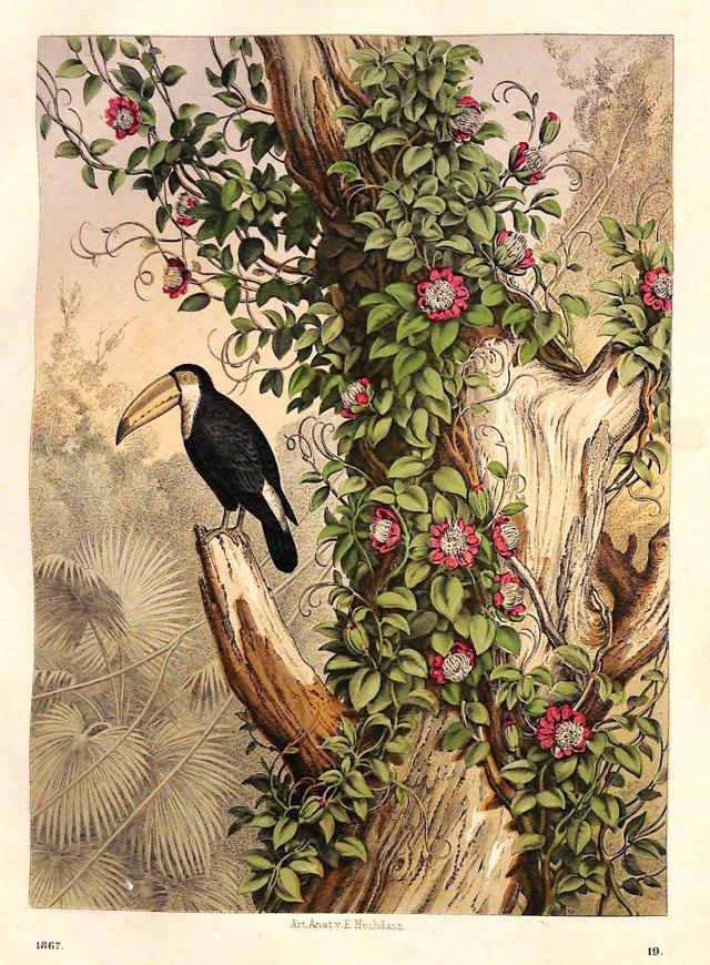 Toucan & Passion Flowers, 1867