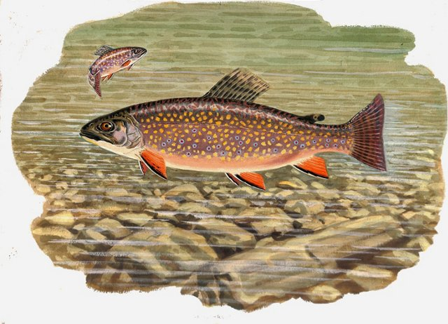 Brook Trout Watercolor
