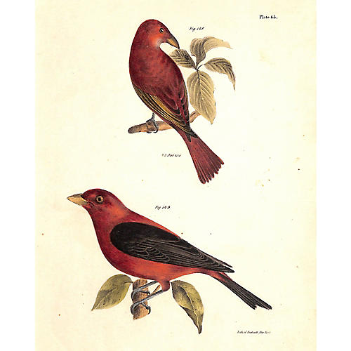 Tanagers, Summer & Scarlet, 1843