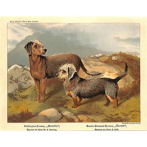 Bedlington & Dandie-Dinmont Terriers