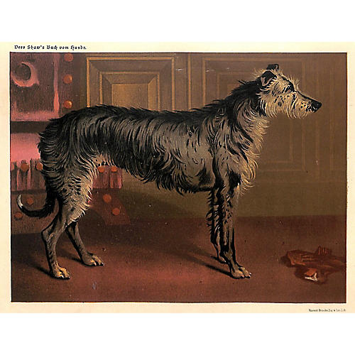 Deerhound, Scottish Deerhound, 1885