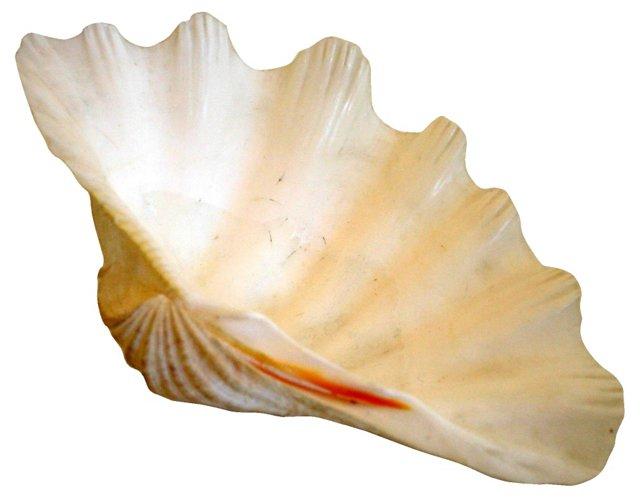 White Clamshell Specimen