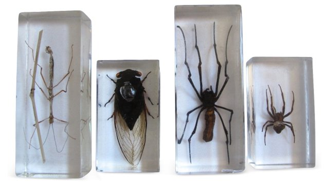 Entomology Science Specimens, S/4
