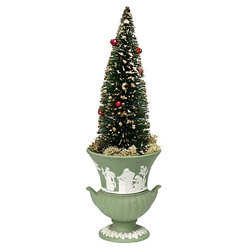 Bottle Brush Tree w/ Wedgwood Pot