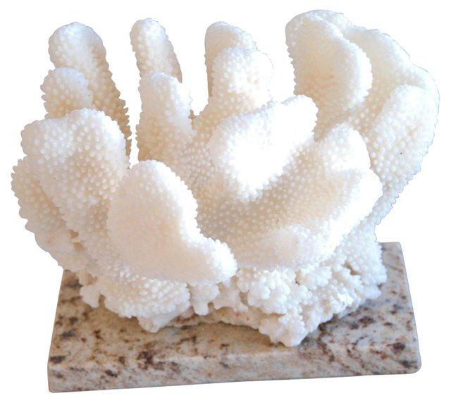 Coral Specimen on   Granite Slab
