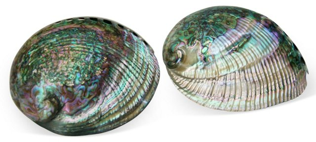 Mother-of-Pearl Abalone Shells,     Pair