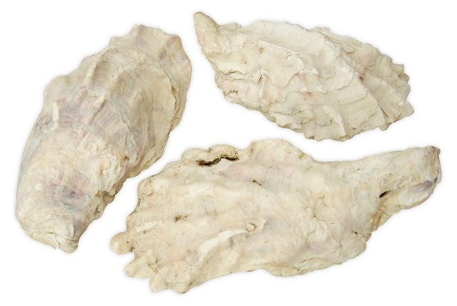 Oyster Shells, S/3