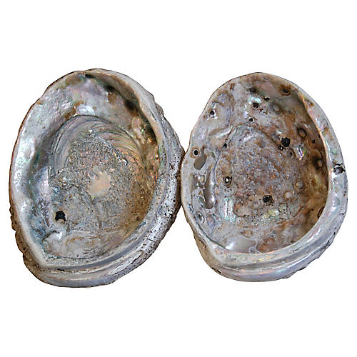 Nautical Abalone Seashells, 2 Pcs