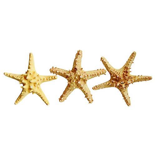 Large Tan/Gold Knobby Starfish, S/3