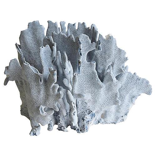 Natural Ocean Sea Blue Coral Specimen