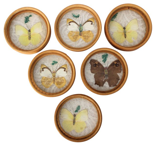 Butterfly & Bamboo Coasters, S/6