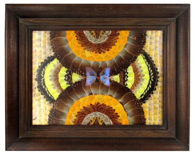 Framed  Butterfly Wing Collage