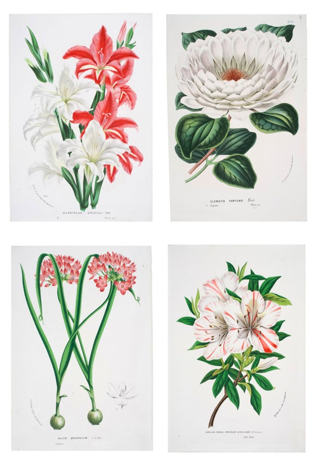 Pink & White Flowers, C. 1865, S/4