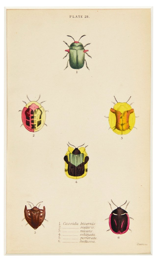 Hand-Colored Beetles, C.  1835