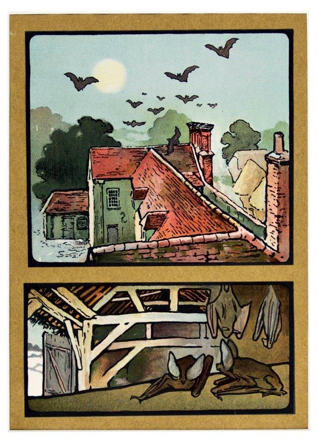 Lithographs of Bats, 1909