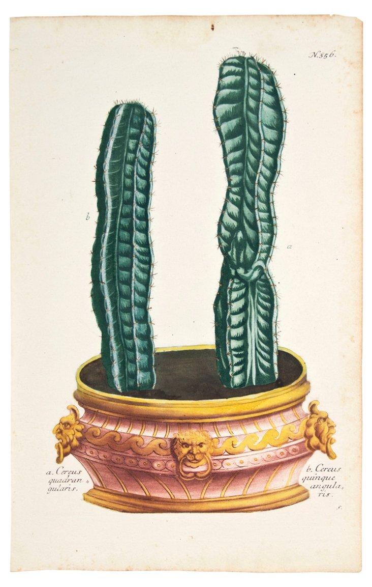 Johan Weinmann Cereus Cactus, C. 1740