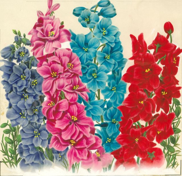 Larkspur Watercolor, C. 1935